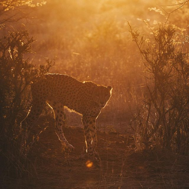 image: Low sun & golden light. Nap is over, it's time for a hunt. @erindinamibia by lebackpacker