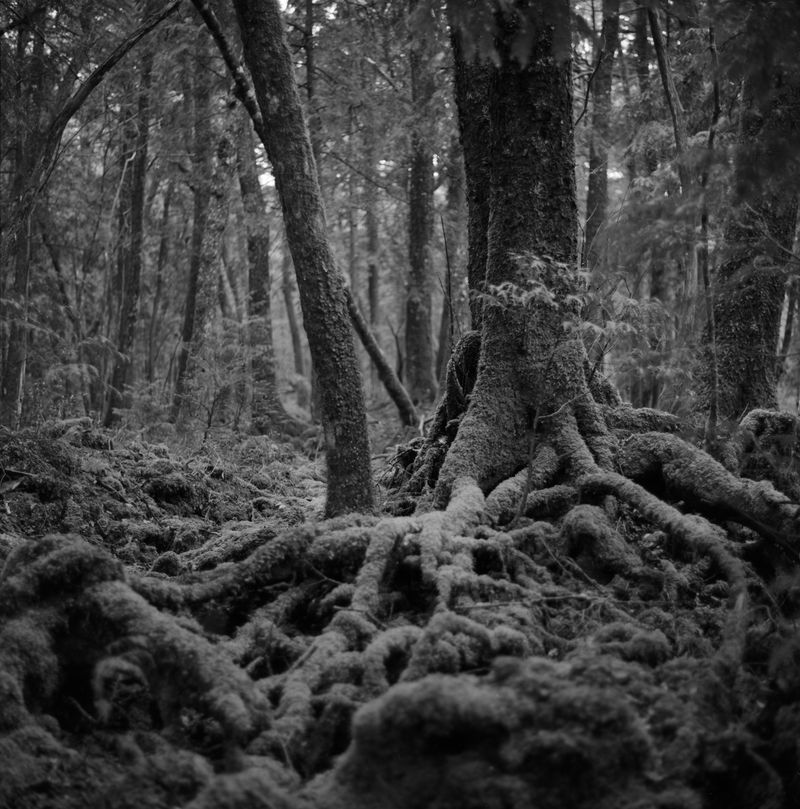 image: FOREST by mrcpaccagnella