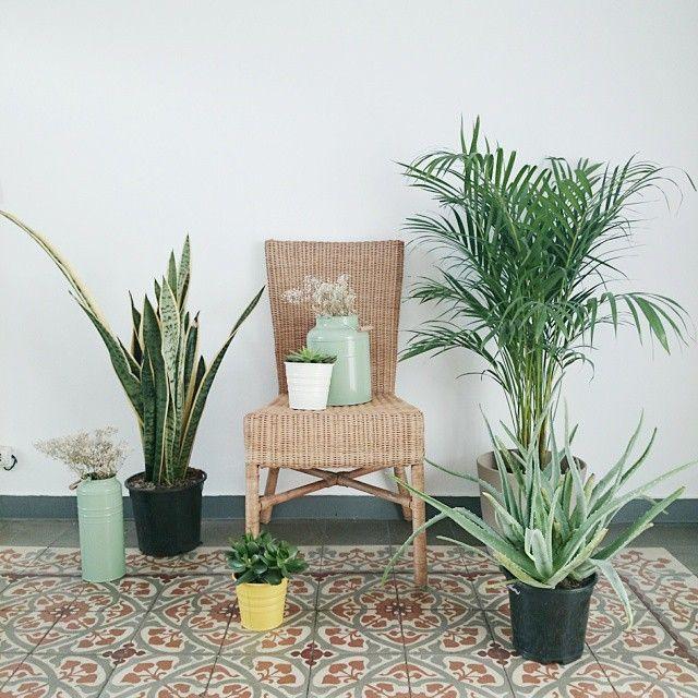 image: Comprar plantas para parar un tren en lugar del 80% ... by pilar_francoborrell