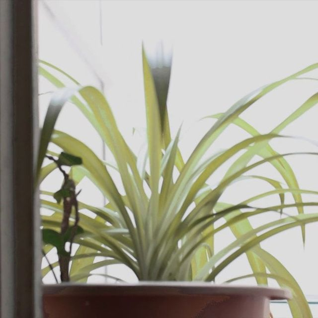 video: five senses project on Vimeo by carlos-ariel-marques