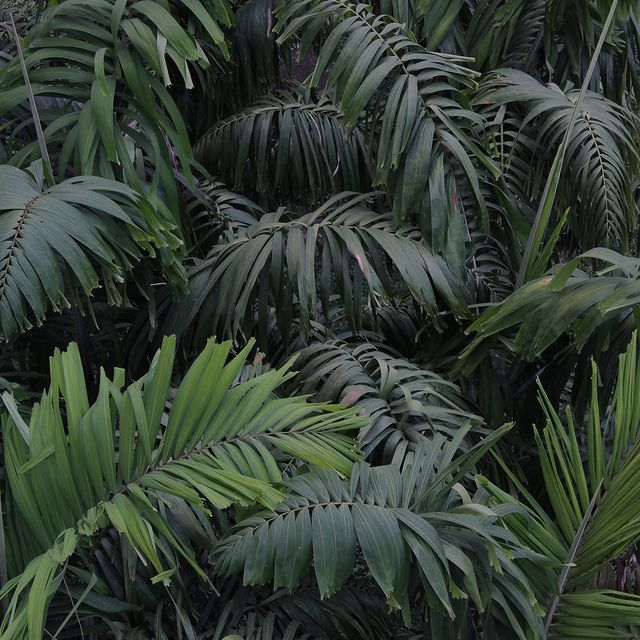 image: plants by angelasuarez
