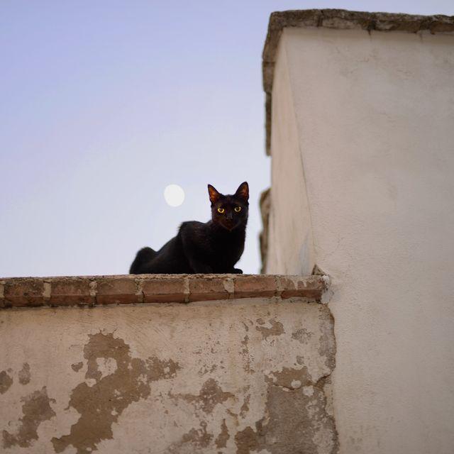 image: Gato Negro by wendy13ird