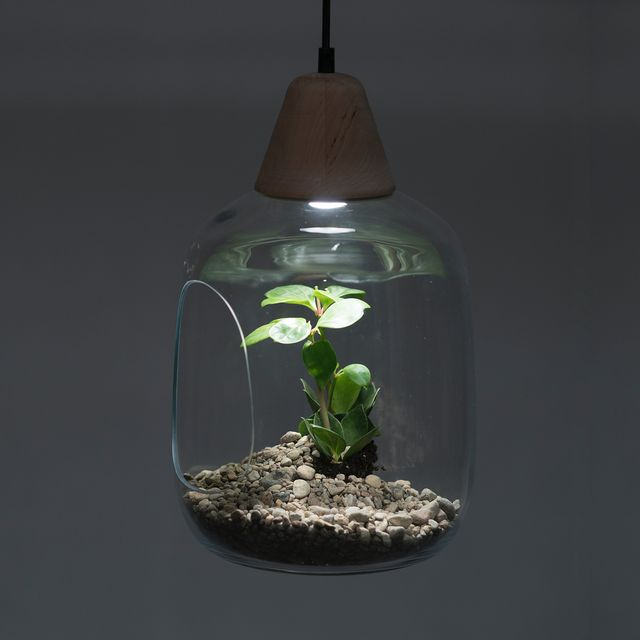 image: Milo is a simple glass lampshade which displays beauty of nature. A plant put on a pedestal to celebrate its presence, brings us closer to nature and teach us how to bemore sensitive for plants needs. The lamp is dedicated to small, potted blooming... by product