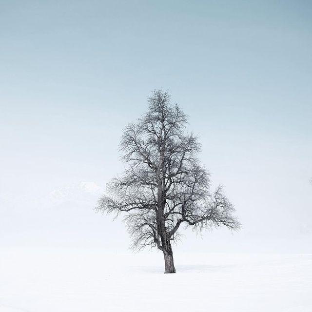 image: That misty morning in Tirol ~ by plndm