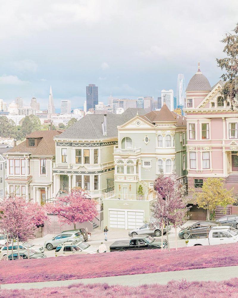 image: Painted ladies' neighbors by teresacfreitas