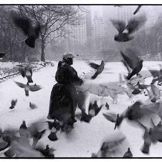 image: IMAGE: © Bruce Davidson/ Magnum Photos. Central Park, 1992. @magnumphotos #magnumphotos #brucedavidson #snowy #centralpark #nyc #90s  #winter  #pidgeons #newyork #baglady by brucedavidson