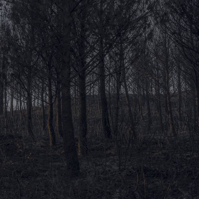 image: Black Forest by MiguelG