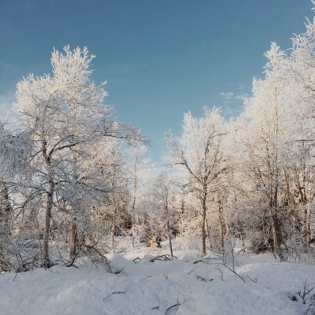 image: Winter Wunderbaum. by jan_ove