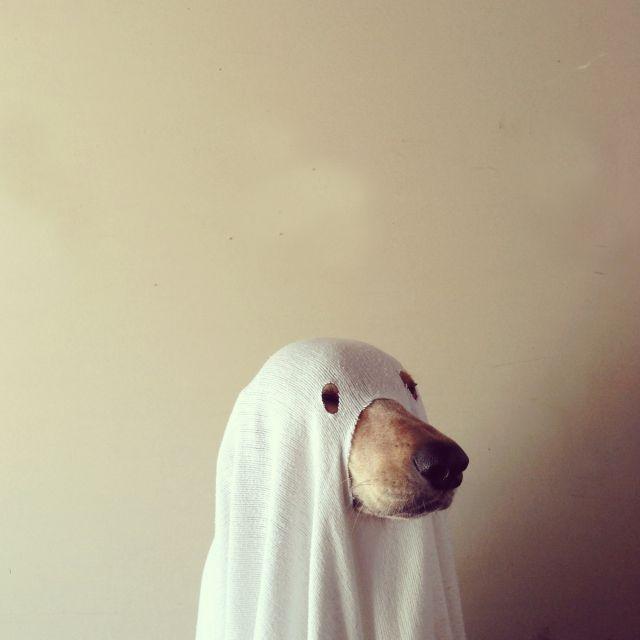 image: Perro fantasma by decmykargb