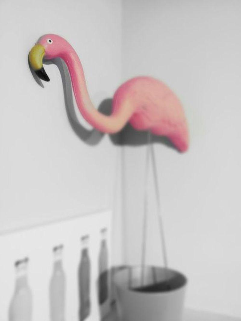 image: Flamingo by mordovas